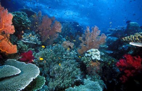 terumbu-karang-raja-ampat