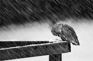 Heavy-Winter-Rain